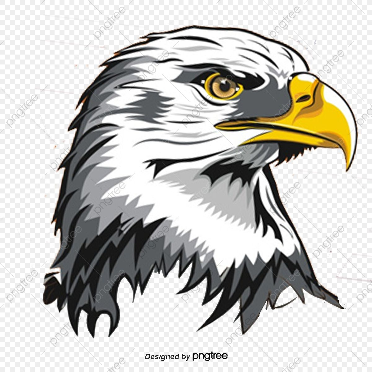 Eagle Eagle Vector Animal Renderings Png Transparent Clipart Image And Psd File For Free Download Eagle Vector Eagle Images Eagle Drawing