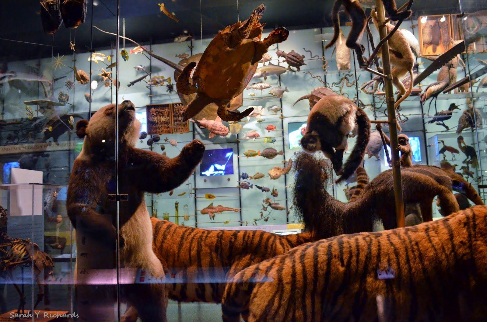 Descubre Cómo Ir Gratis Al Museoamericanodehistorianacional Amnh Museo Museum Ballena Whale Nyc Nueva Museo Americano De Historia Natural Museos Arte