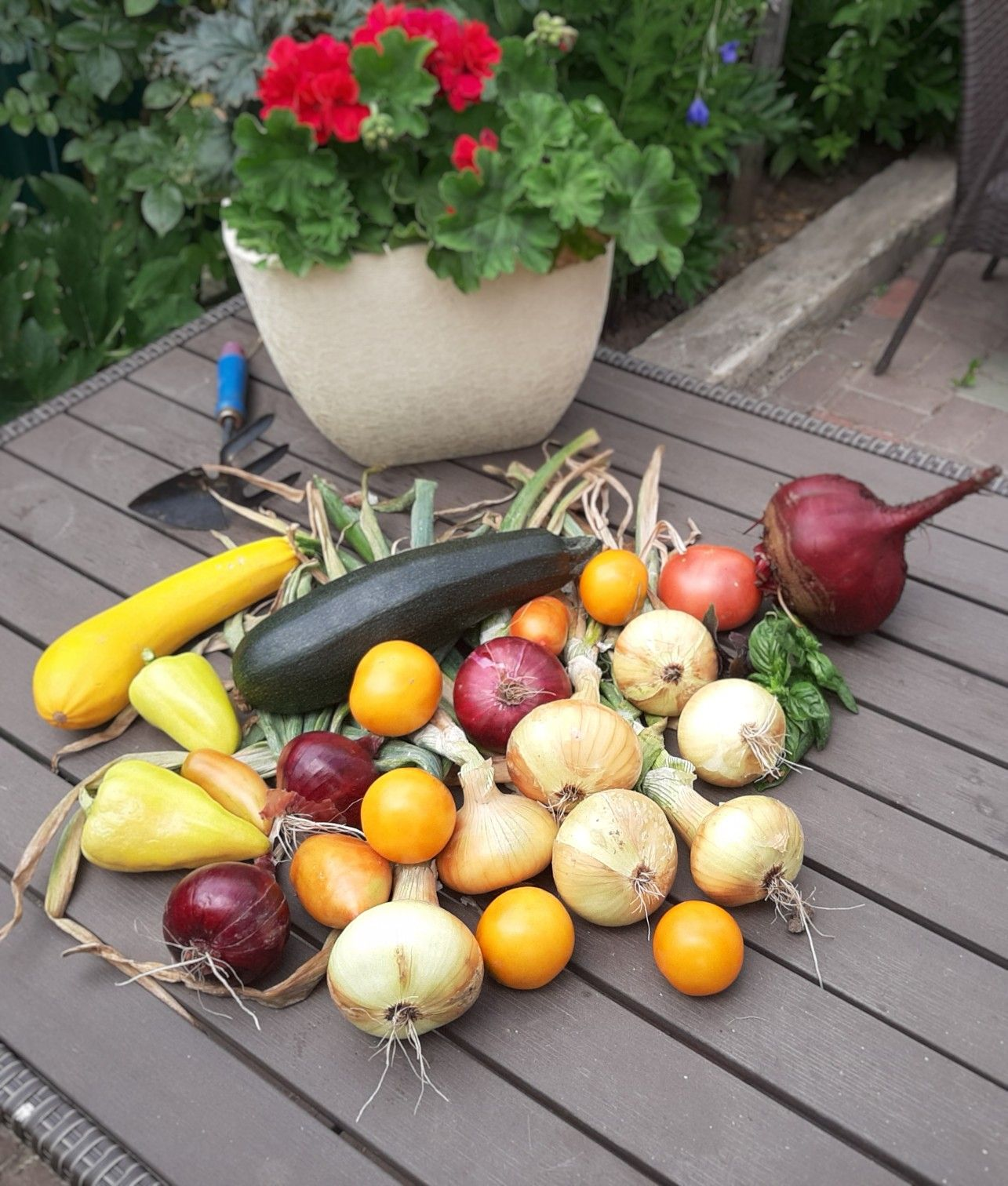 заказ семян овощей