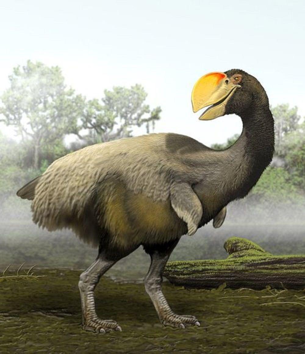 Art illustration Prehistoric Birds Bullockornis