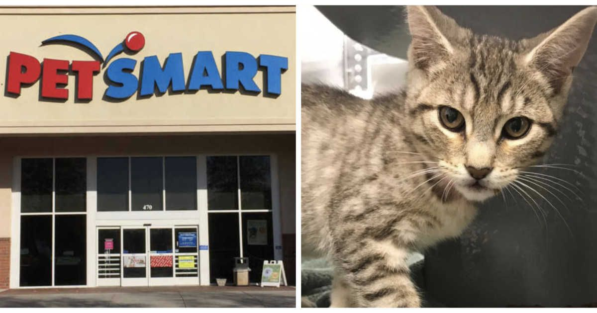 Petsmart Near Toronto Is Hosting A One Day Kitten Adoption Event
