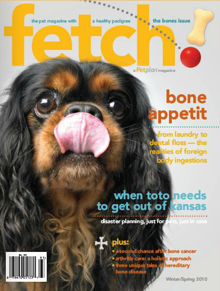 The bare bones on pet health issues is exposed in the