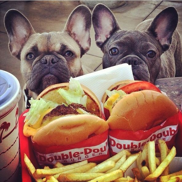 Hamburglarz..... French Bulldogs at 'In & Out'.