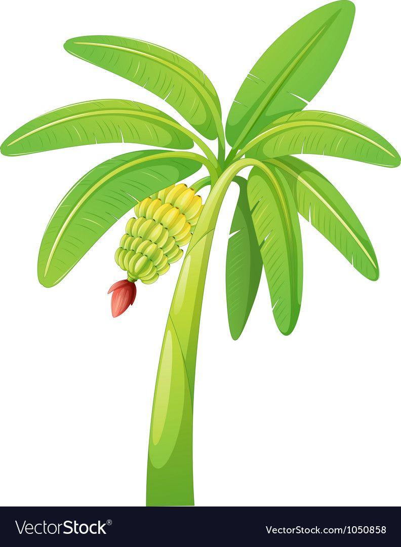 Banana Tree Vector Image On Vectorstock Banana Tree Tree Clipart Leaf Clipart