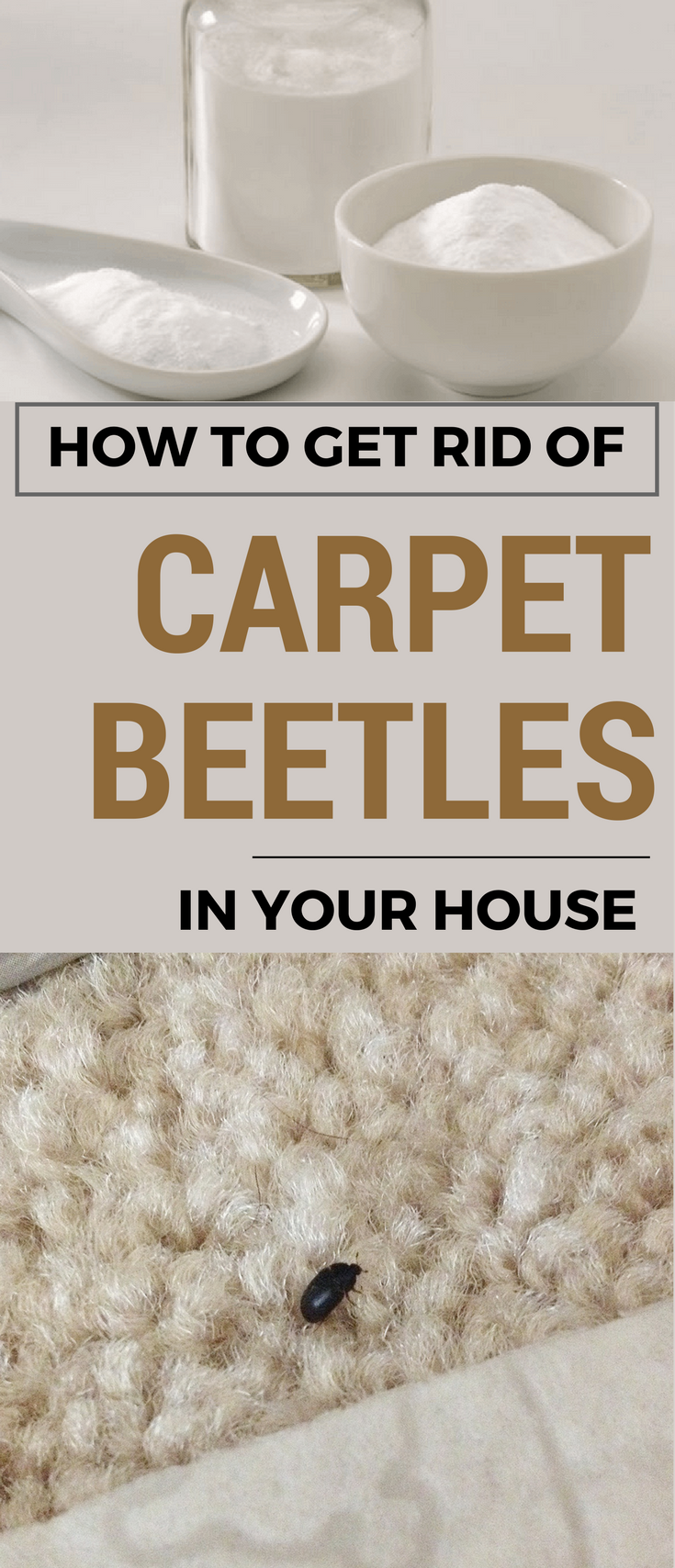 How To Get Rid Of Carpet Beetles In Your House Ncleaningtips Com Cleaning Hacks Clean Dishwasher Deep Cleaning Tips