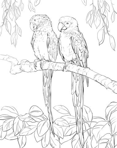 Two Scarlet Macaws Coloring Page Free Printable Coloring Pages Bird Coloring Pages Super Coloring Pages Bird Drawings
