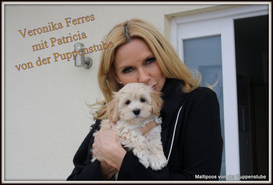 Unsere Bekannten Welpenkaufer Maltipoo Maltipoos Von Der Puppenstube Designer Hunde Hobbyzucht Welpen Maltipoo Puppenstube