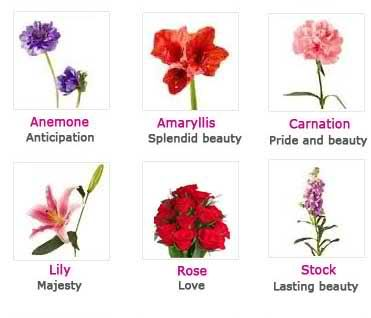 Fuchsia Meaning Flower Meanings Unique Wedding Flowers Diy Wedding Flowers