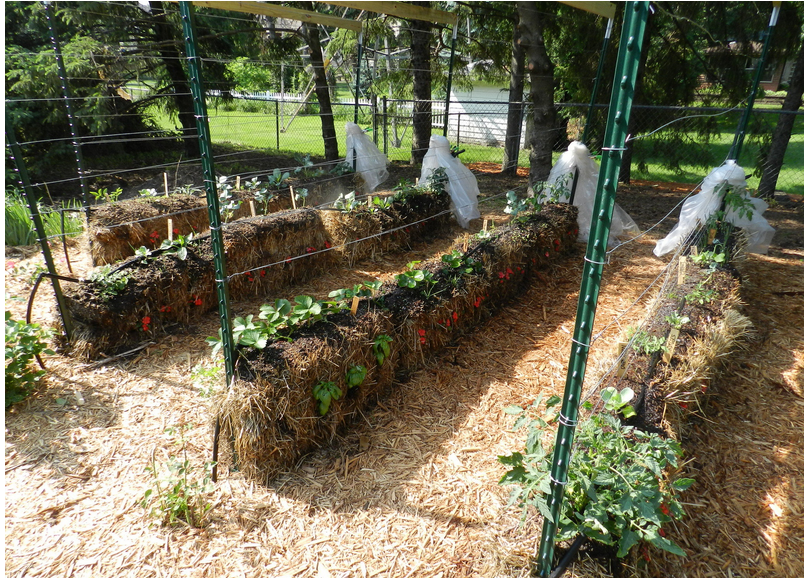 Hay Bale Gardening No Weeds No Fertilizers And Less Watering