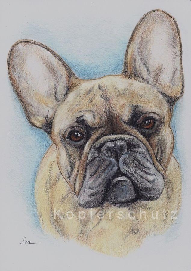 French Bulldog Frenchie Französische Bulldogge Hund Zeichnung