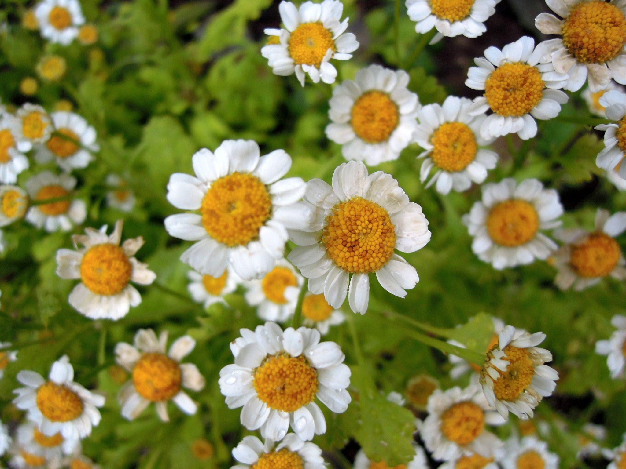Explore Daisy And More