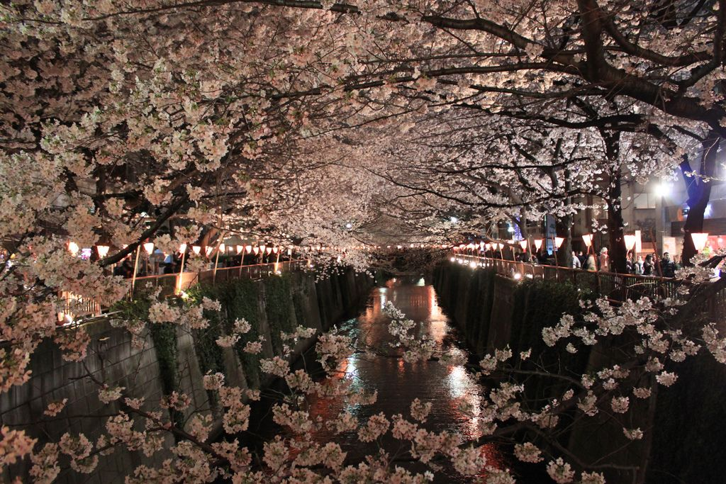 Shimomeguro Tokyo Japan Creative Poster Design Creative Posters Cherry Blossom