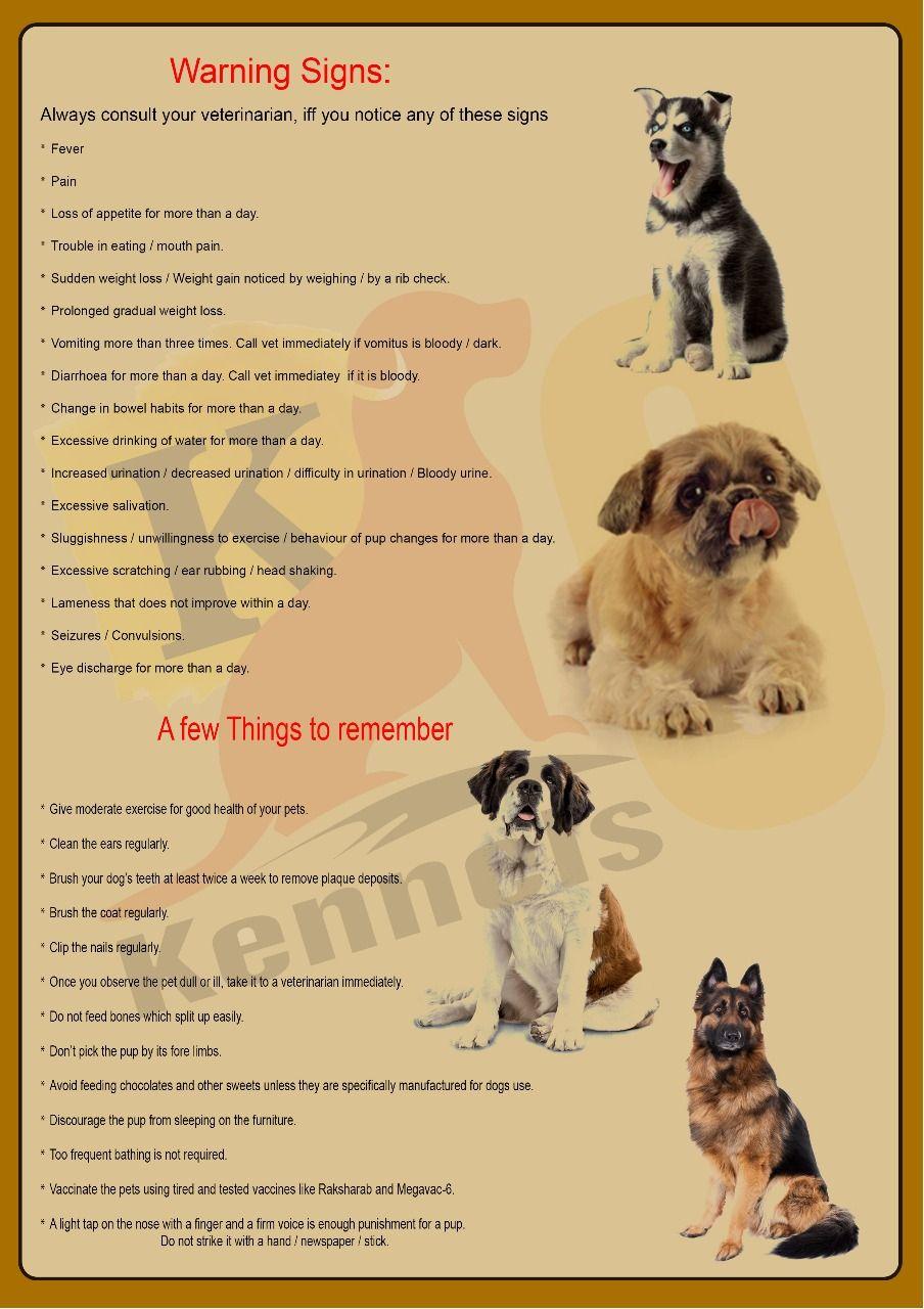 Dog Training Services Dog Daycare Dog Grooming And Bathing