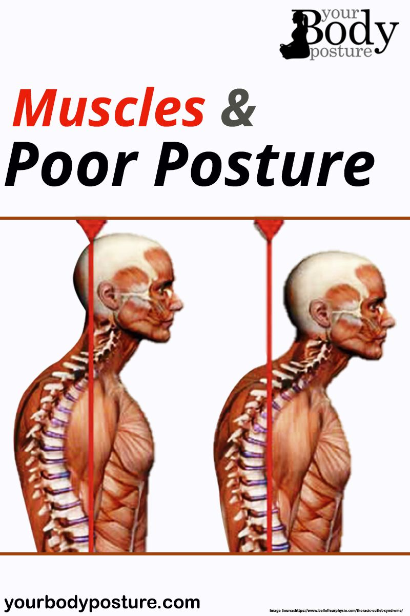 19+ Skeletal muscle injuries such as osteoporosis info