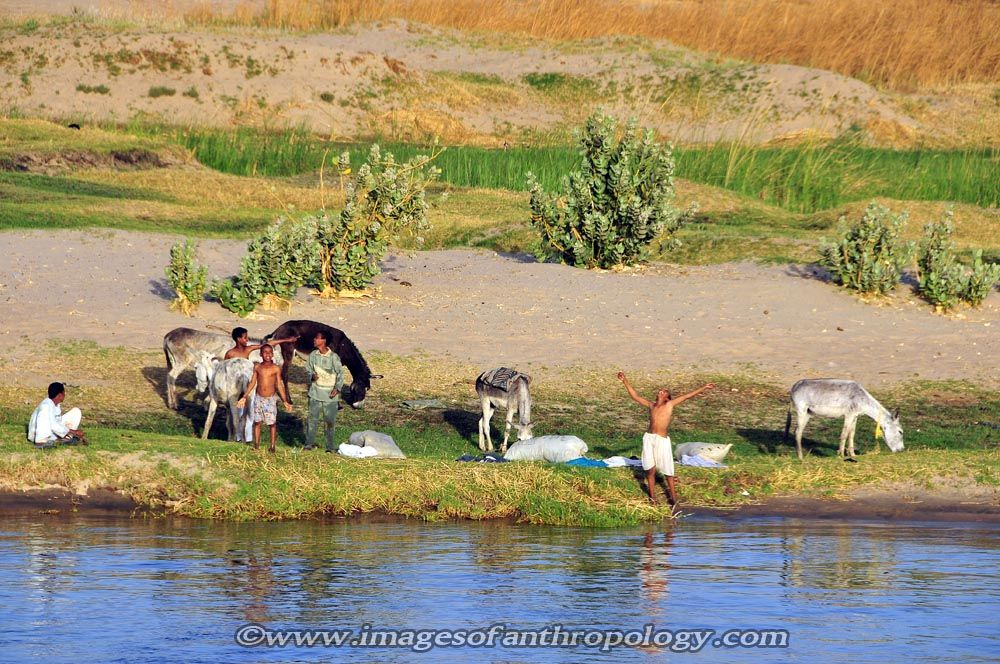 Farm Ancient Egypt Nile River | the nile river so ...