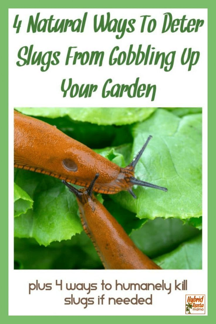 how to get rid of snails without killing them