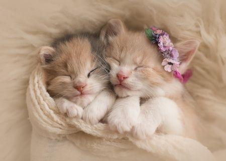 Sleeping beauties - Desktop Nexus Wallpapers | Kittens cutest, Kitten  wallpaper, Cute cats