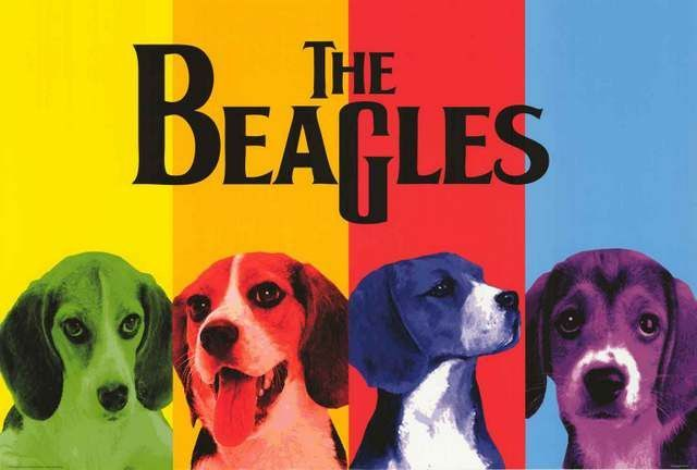 The Beagles Beatles Dog Parody Poster 24x36 Beagle Beagle Art