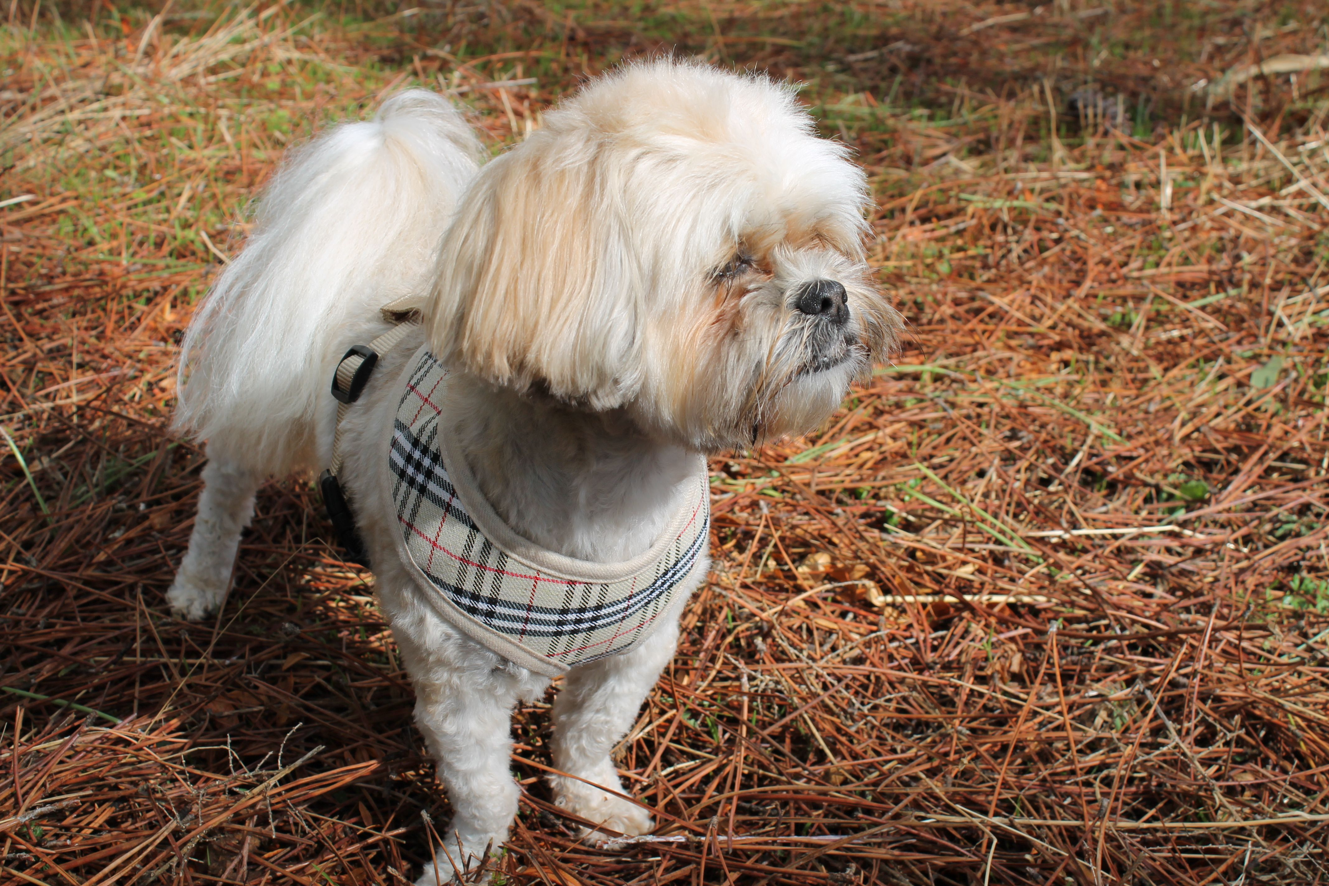 Our Model Lady Trudy Rocking Her Burberry Harness In The Forest