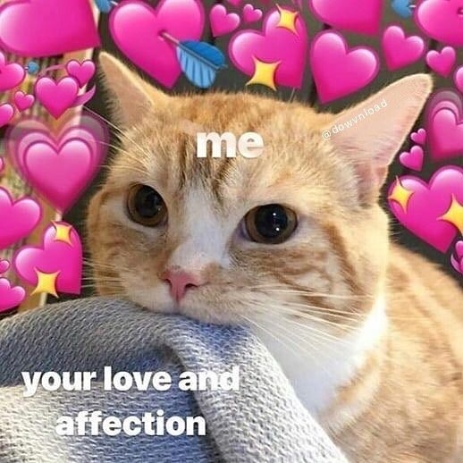 Lovememes On Instagram Subscribe Dowvnload Tag Cute Cat Memes Cute Love Memes Love Memes