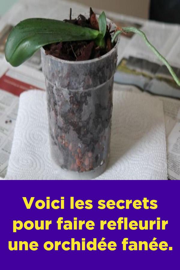 Voici Les Secrets Pour Faire Refleurir Une Orchidee Fanee Faire