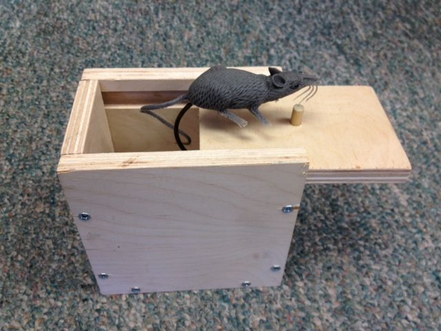 Mouse Scare Box Plans (DIY Mouse, Spider or Snake Prank Box