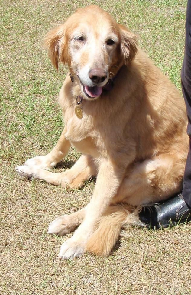 Adopt Lily On Dog Training Tips Pet Care Training Your Dog