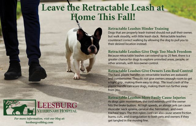 Happy First Day of Fall! Enjoy the great outdoors w/ your pet this Autumn, just leave the retractable leash at home!