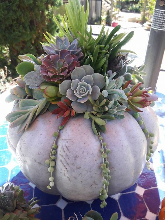 Succulent Arrangements for Your Table #steingartenideen