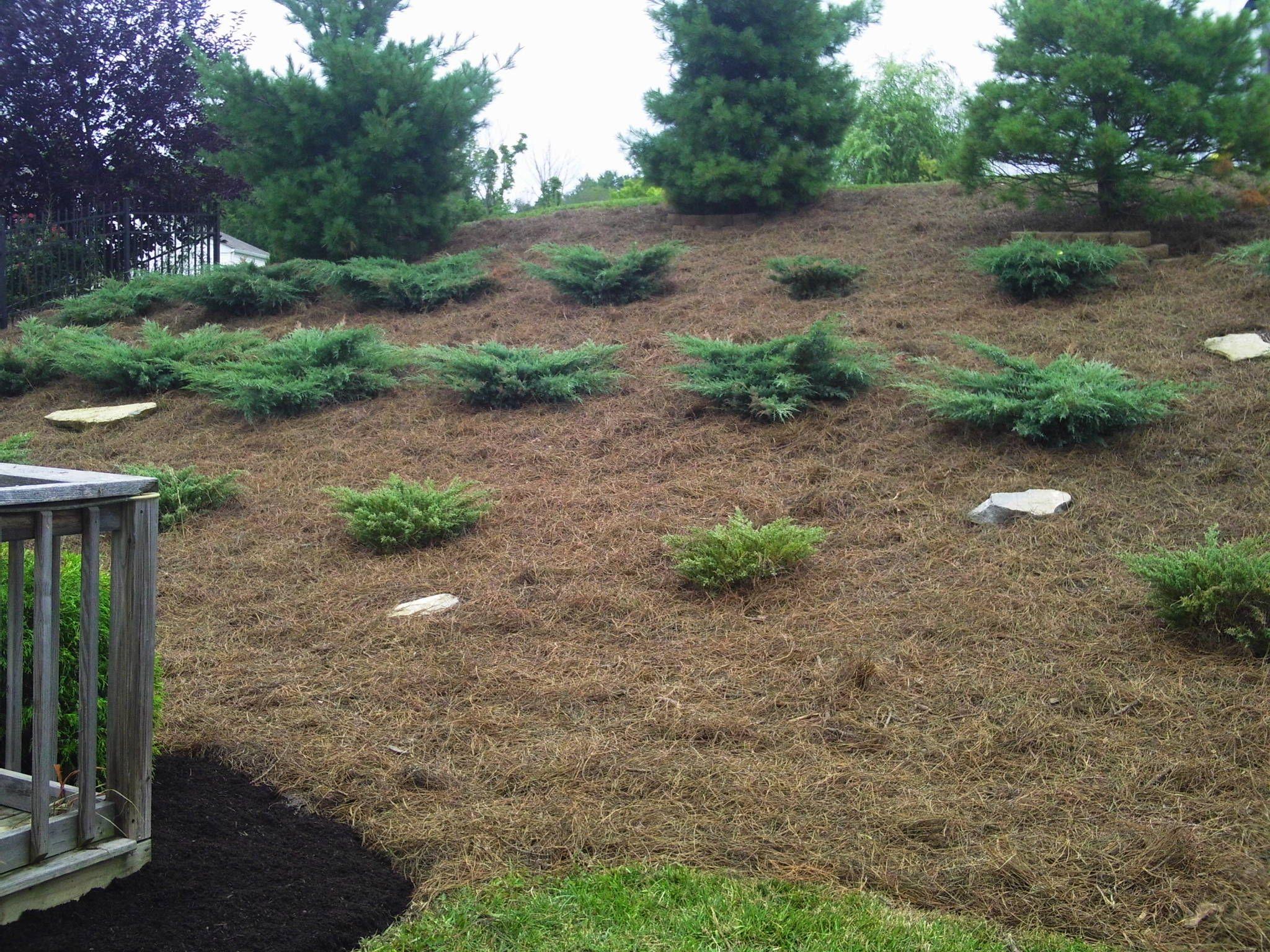 Landscape Job 12 Mulch Landscaping Pine Straw Landscaping Hillside Landscaping