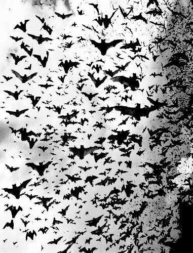 Halloween-BATS, Bats and more bats