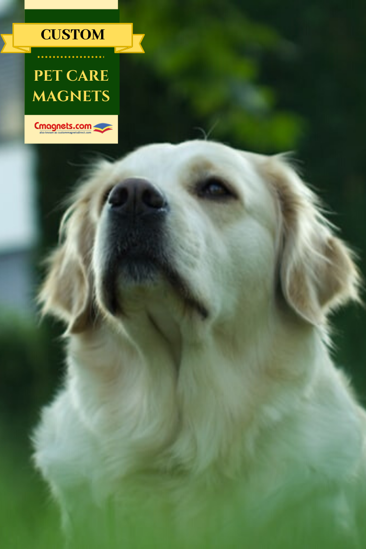 Pet Care Magnets Innovative Handouts That Help You Stand Out From The Competitors Petcare Magnets Pet Clinic Pet Care Pets
