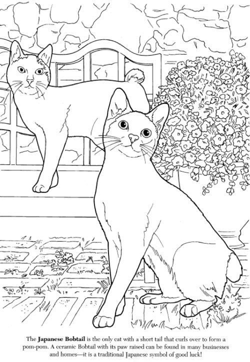 The Cat Lovers Coloring Book: Japanese Bobtail: | products ...