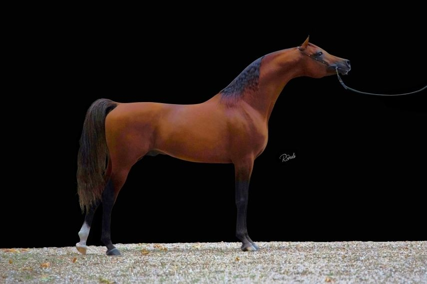 Epingle Par Nj Md Sur Kas Von Dutch 2006 Purebred Arabian Stallion Sired By Kubinec Out Vypiska By Piligrim