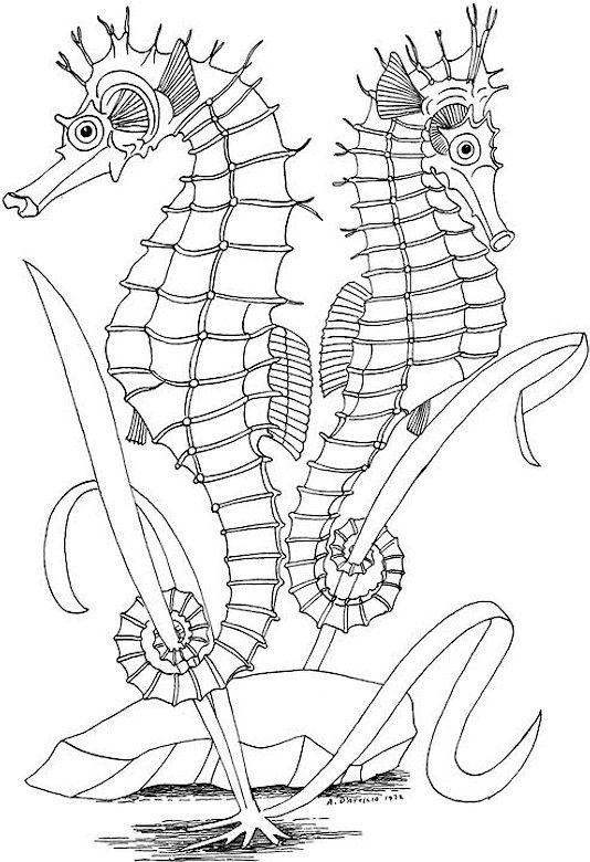 click on a picture to make it larger then print it out and enjoy your ocean coloring pagesfree - Make Coloring Pages From Photos Free