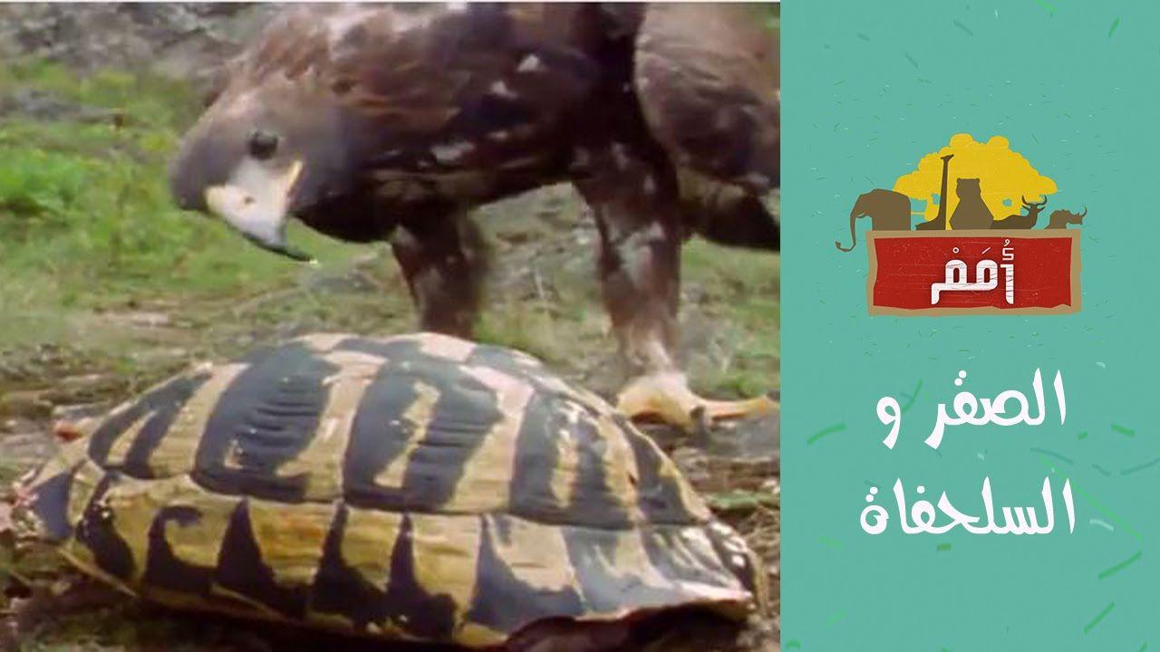 Omam أ مم الصقر و السلحفاة Turtle Animals