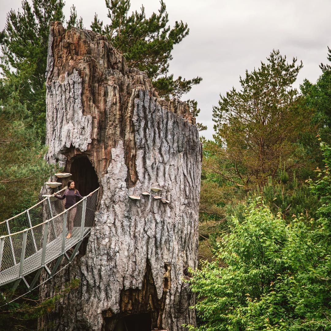 You Can Walk Through This Massive Elevated Treetop Trail Near Ontario This Summer Cool Places To Visit Trail Ontario