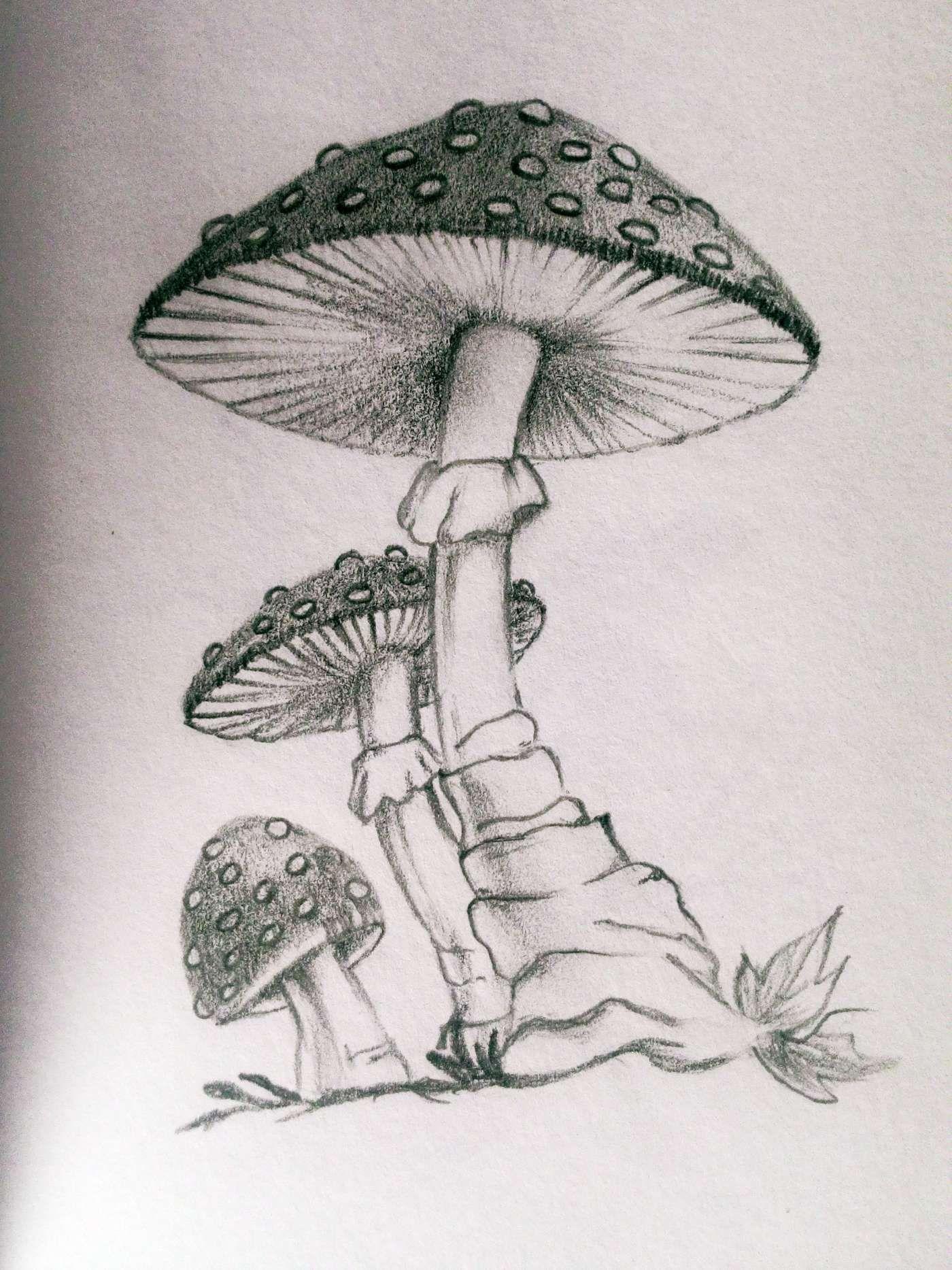 10+ Mushroom Pencil Drawing   Mushroom drawing, Drawings, Pencil ...