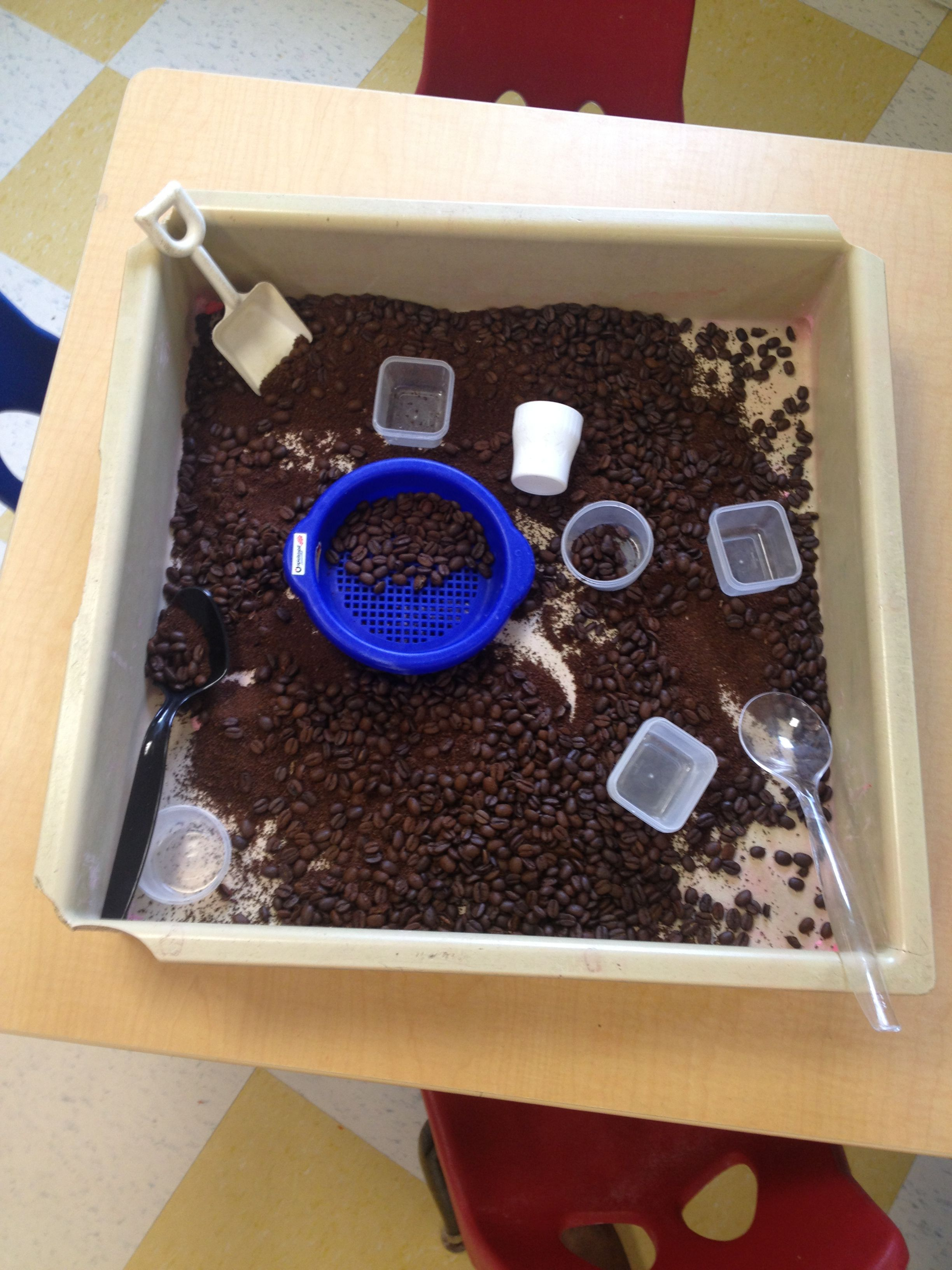 Sensory Table For 5 Senses Week Coffee Grounds And Whole