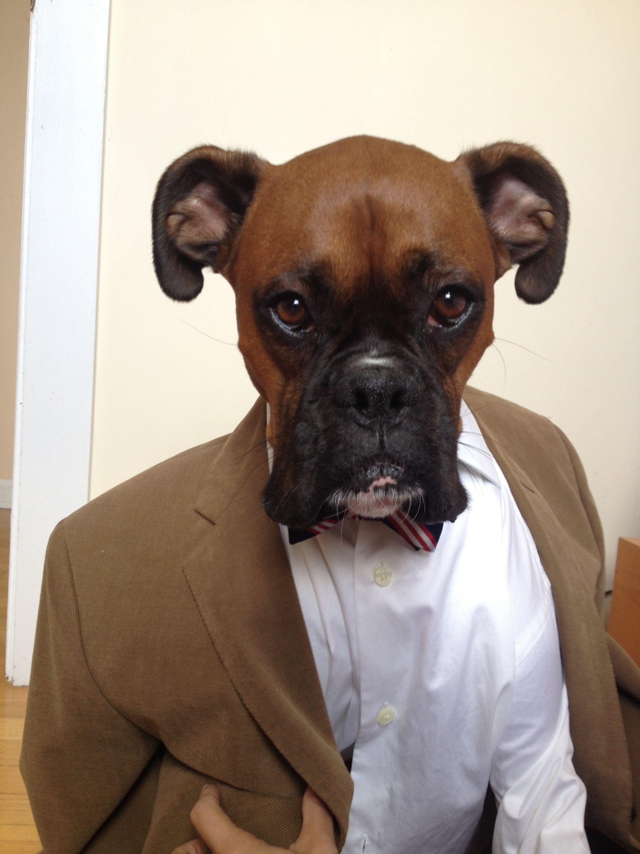 Menswear Dog Boxer Funny Face Edition Funny Boxer Boxer Dog