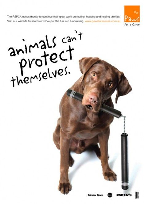 STOP ANIMAL ABUSE CAR WINDOW STICKER WILDLIFE CONSERVATION