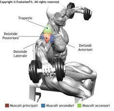 Bodybuilding Techniques Https Planetsupplement Com Body Building Nutrition Basics Deltoid Workout Shoulder Workout Muscle Fitness