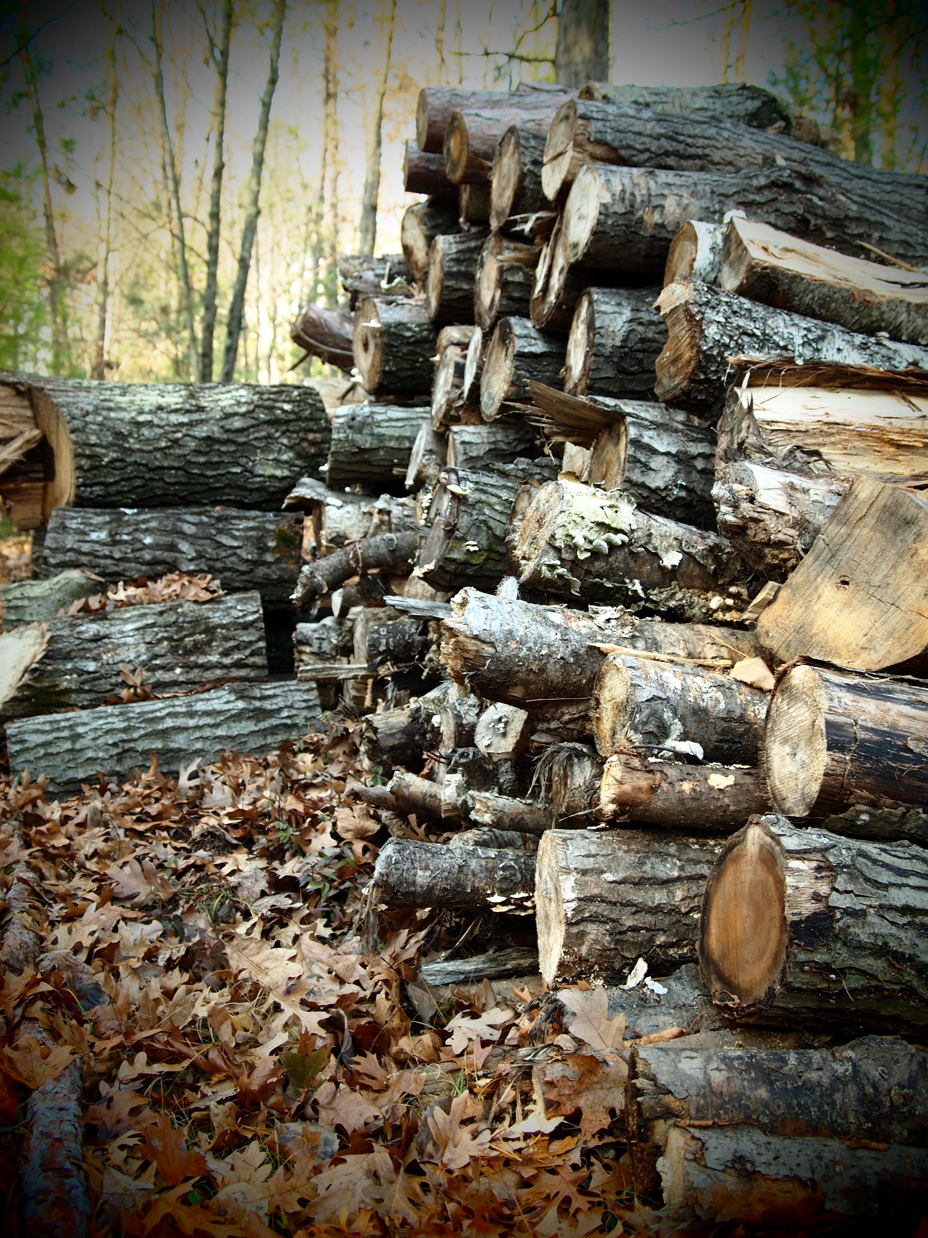 periodic excursions to the woods with Dad and Joel to find firewood.