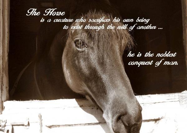 horse whisperer poem