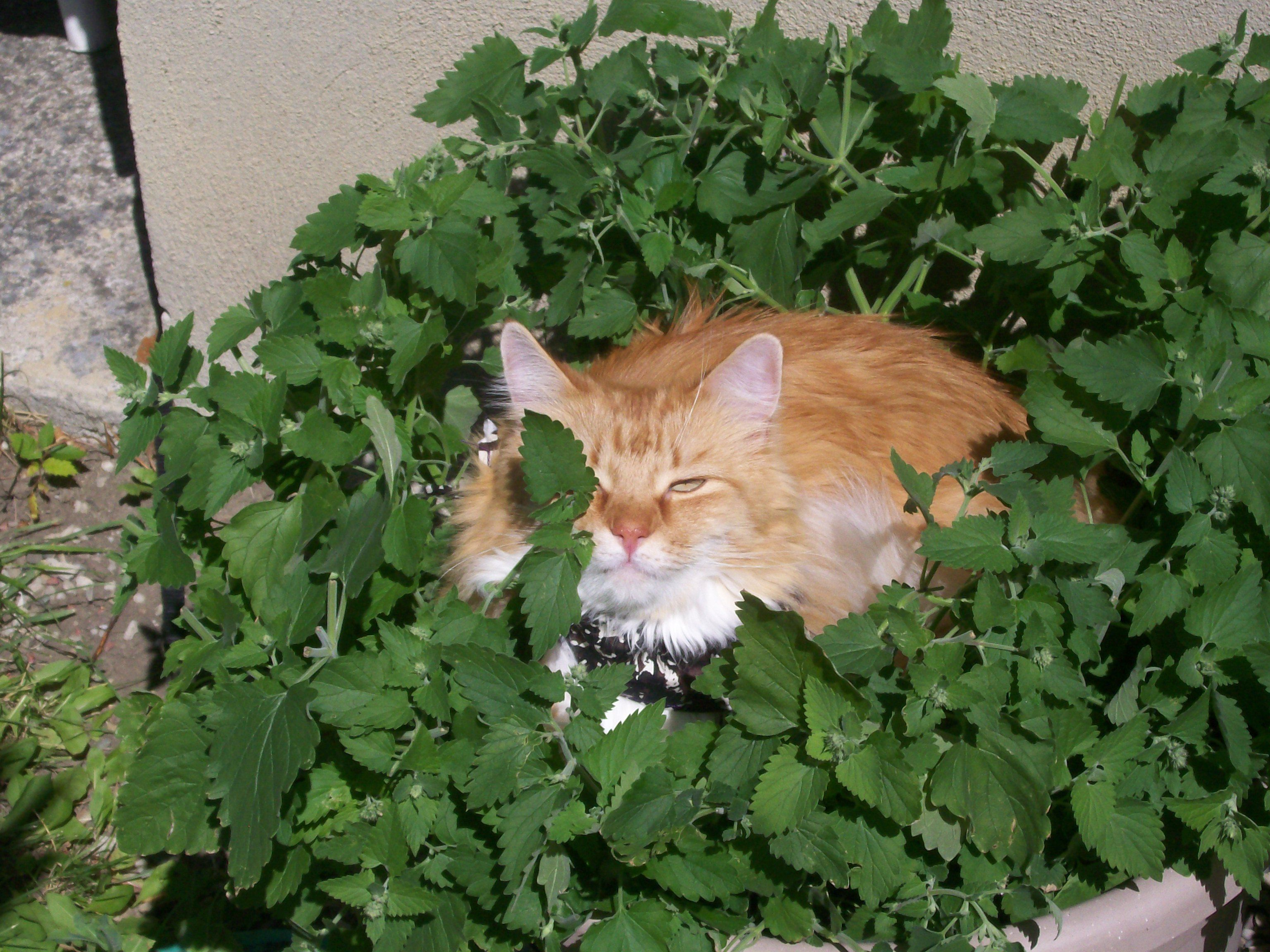 "Cats ..""My Catnip!!"""