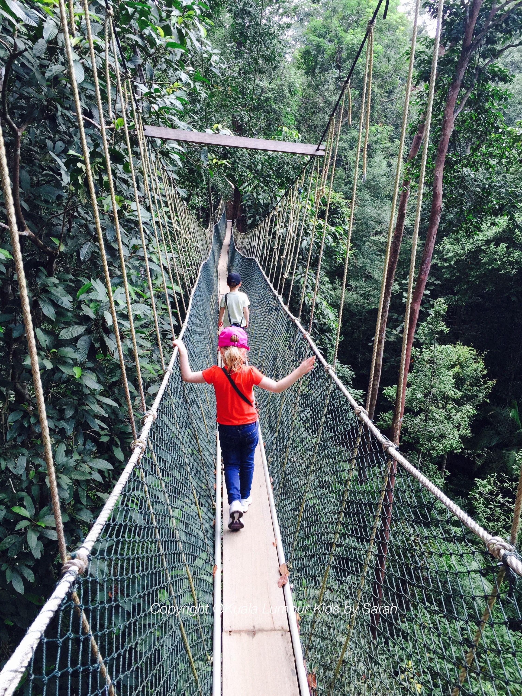 The Canopy Walkway Of Taman Negara With Children Bridges Paths