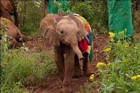 Resultado de imagen para kamok elephant