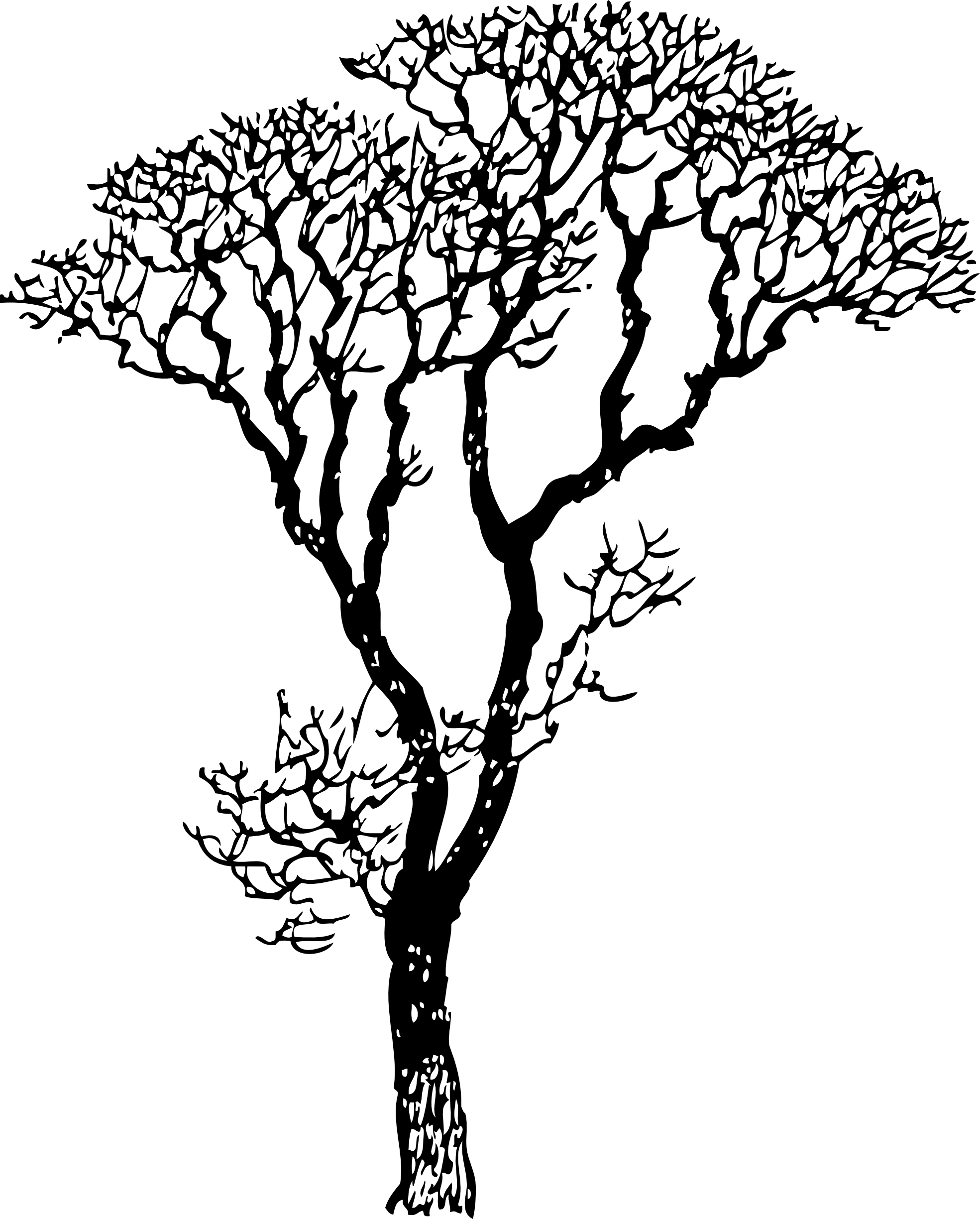 Bare Tree Black White Line Art Coloring Book Colouring Letters
