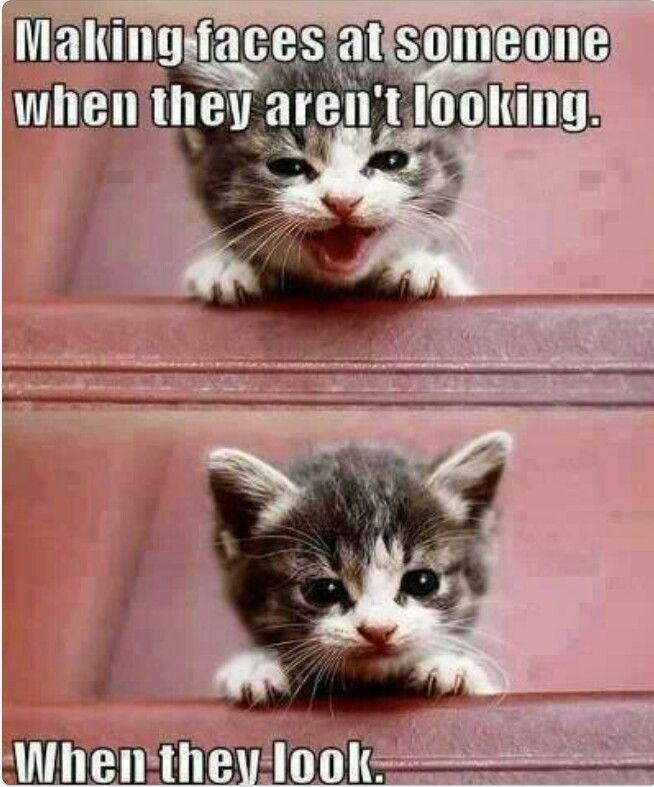 B Funny B Sayingsfunny Animals With B Funny B B Sayings B Kid B Stuff B Pinterest Ad Funny Cat Pictures Kittens Funny Funny Animal Pictures