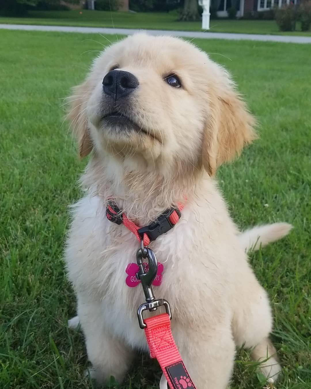 30 Best Dog Names For Gorgeous Golden Retrievers Pictures In